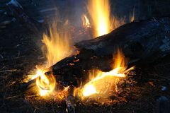 Burning campfire. Night with large log Royalty Free Stock Photo