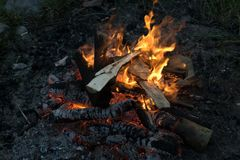 Burning campfire. Close up of burning campfire in summer evening, burning logs in fire royalty free stock images