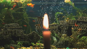 Burning candle on the background of the aquarium. With small fish. Close-up stock video footage