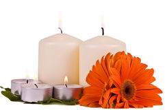 Burning candles and flowers gerbera Stock Images