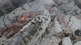 Burning Charcoal stock video footage