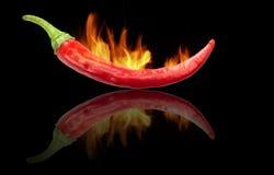 Burning Chili Royalty Free Stock Images