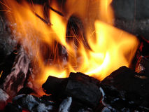 Burning coals. Birch coals burn with a bright flame royalty free stock photography
