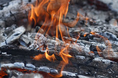 Burning coals with a white ash and red flames Stock Images