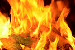 Burning corn cobs Stock Photography