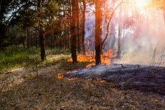 Burning d'incendie de forêt, le feu de forêt étroit au temps de jour photos libres de droits