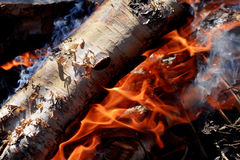 Burning de bois de chauffage de bouleau Photographie stock libre de droits