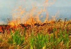 Burning de la cosecha del trigo Imagen de archivo libre de regalías