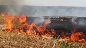 Burning del campo almacen de metraje de vídeo