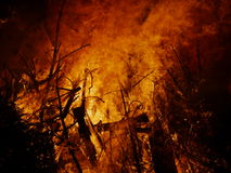 burning del falò Immagini Stock Libere da Diritti