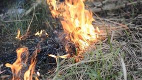 Burning del fuego almacen de metraje de vídeo