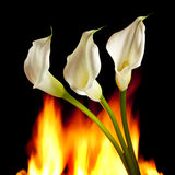 Burning desire Royalty Free Stock Image