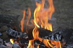 Evening bonfire in the scout camp stock images