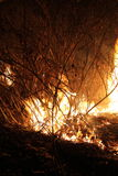 Burning dried grass. At night Royalty Free Stock Images