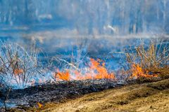 Burning dry grass Royalty Free Stock Photos