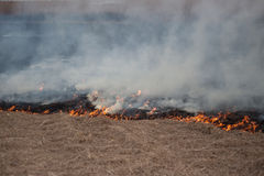 Burning dry grass Stock Photography