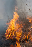 Burning dry grass Stock Photo