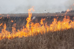 Burning dry grass Royalty Free Stock Images