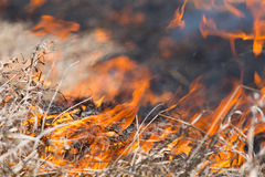Burning dry grass Stock Image
