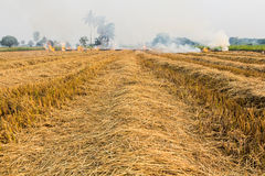 Burning dry grass. Royalty Free Stock Photography