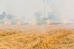 Burning dry grass. Stock Photo
