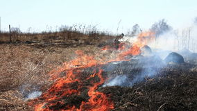 Burning dry grass stock video footage