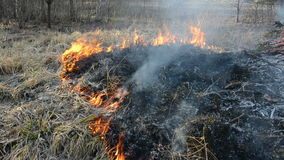 Burning dry grass in early spring time Royalty Free Stock Images