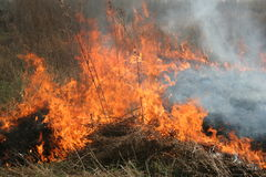 Burning dry grass in the field. Field on fire, burning dry grass Royalty Free Stock Photo