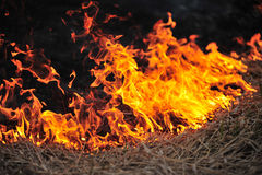 Burning dry grass in the field. Field on fire, burning dry grass Stock Image