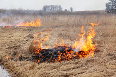 Burning dry grass Royalty Free Stock Photo