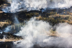 Burning dry grass on field Stock Photos