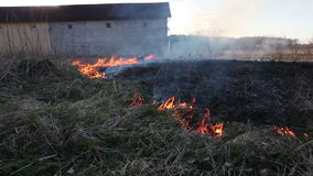 Burning dry grass stock video