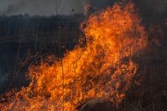 Burning dry grass Royalty Free Stock Photo