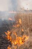 Burning dry grass Royalty Free Stock Image