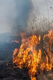 Burning dry grass Stock Photos