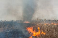 Burning dry grass Royalty Free Stock Photography
