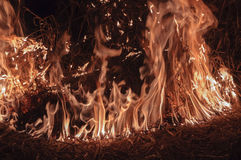 Burning dry grass at night. Fire on location with dry grass at night Stock Photo