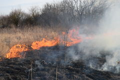 Burning dry grass and reeds. Cleaning the fields and ditches of the thickets of dry grass Stock Images