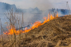 Burning dry grass on the river bank. Spring. On the banks of the river lit up the grass, very close to the village Stock Photography