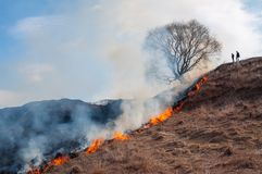 Burning dry grass in spring in the fields of Russia royalty free stock image