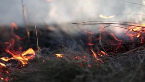 Burning dry grass Stock Images