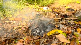 Burning dry leaves on the ground stock video