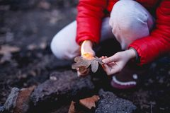 Burning dry oak leaf. The child sets fire to a dry leaf Stock Photography