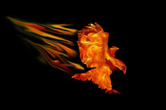 Burning eagle isolated over black background. Burning flying eagle isolated over black background Royalty Free Stock Photos