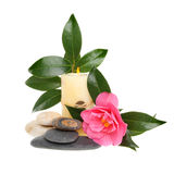 Camellia and candle Stock Photography