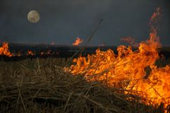 Burning field. At night Royalty Free Stock Images