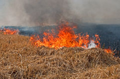 Burning field. Fire on the field in an arson attack by people Royalty Free Stock Images
