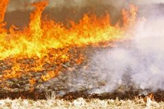 Burning field of grass Stock Photo