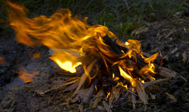 Burning fire. From the combined fire wood Royalty Free Stock Images