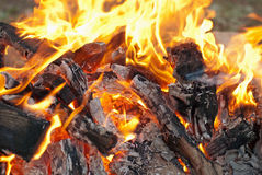 Burning fire. And charcoal campfire Royalty Free Stock Photo
